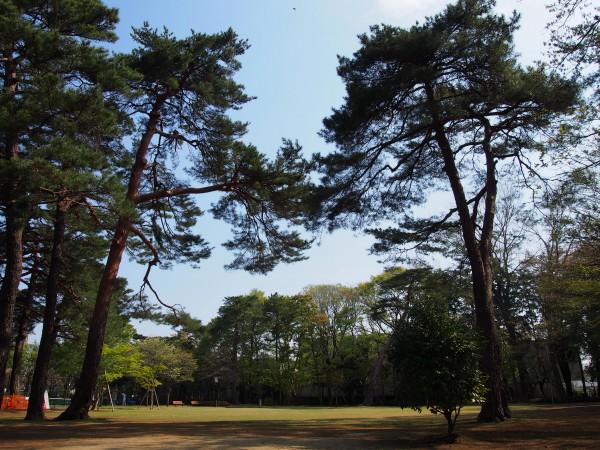 20140414石神井松の風文化公園